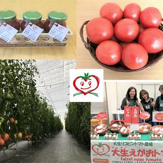 ぎっしりトマト